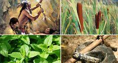 11 Pflanzen, die von den Indianern verwendet wurden, um fast alles zu heilen