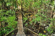 Monkey Trail to Underground River, Palawan