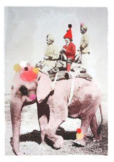 The emperator Elephant photo print