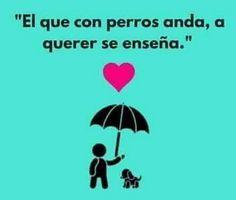 Amo a mis perritos 4 son 😊😊😊 - Gabriela de los A. Carrillo Peniche - Google+