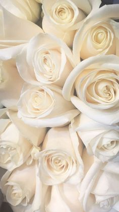 Trendy wedding flowers red and white roses purple 30 ideas Red Wedding Flowers, Pretty Flowers, Purple Flowers, White Flowers, Red Roses, Red And White Roses, Bouquet Flowers, White Roses Background, White Roses Wallpaper