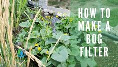 Learn how to build a bog filter that uses the natural cycle of the pond ecosystem. Naturally maintain balance keeping the water crystal clear. Pond Filter Diy, Pond Filters, Outdoor Ponds, Ponds Backyard, Koi Ponds, Natural Swimming Ponds, Natural Pond, Bog Garden, Fruit Garden