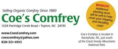 Coe's Comfrey.  Good to feed chickens, feed the compost pile, or distill into liquid fertilizer