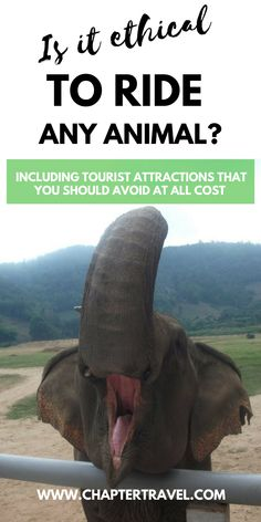 Ethical Travel | Is it ethical to ride any animal | Tourist Attractions that should be avoided | Responsible travel