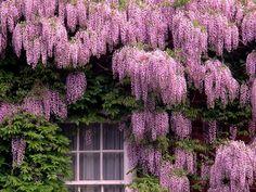 11 plantas trepadoras para adornar el interior o exterior de tu hogar