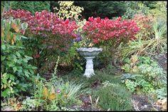Fall Garden Colors