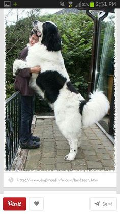 Id love to have a dog this big!