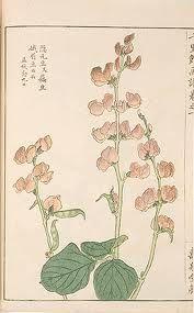 Vintage Japanese botanical prints by Iwasaki Vintage Botanical Prints, Botanical Wall Art, Botanical Drawings, Botanical Illustration, Japanese Drawings, Japanese Art, Changing Leaves, Nature Animals, Vintage Japanese