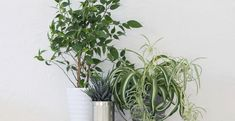 Go green with the three houseplants that will be happy in the kitchen Farming, Agriculture, Indoor Garden, Indoor Plants, Making Hard Boiled Eggs, Foliage Plants, Plantar, Deco Design, Terracotta Pots