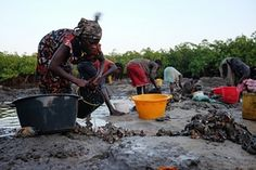 Women from Anacamona wash oysters