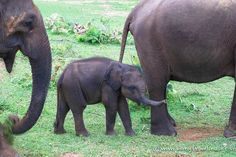 How to improve your travel photography so that you can come home with beautiful photos every single time. Wild Elephant, Take Better Photos, Photography For Beginners, Perfect Photo, Sri Lanka, Elephants, Places To See, Travel Photos, Traveling By Yourself