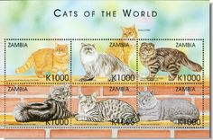 Zambia] - Shorthair Tabby Persian Somali Sorrel British Shorthair and more Exotic Cats and Kittens of the World a Sheet of 6 postage stamps from CoolStamps.com where the stamps are always MINT