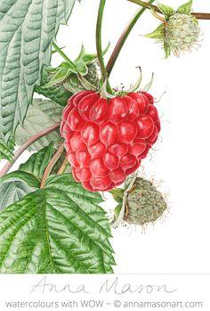 Raspberry © 2009 ~ 31 x 41 cm (12″ x 16″)