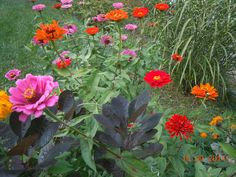 SW blooms