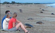 Mexico's Sea Turtle Odyssey- A rare chance for a small group of travelers to view and participate in the release of sea turtles on one of only four such turtle beaches in the world.