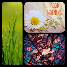 Good morning - Collage made by KaDK