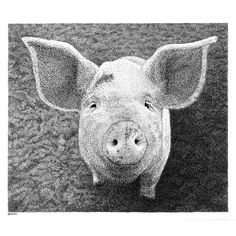 Piglet, Scott Woyak, stippled, pen and ink.