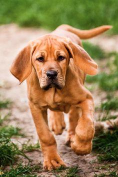 Adorable little hound!!
