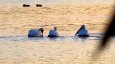 Garzas Lago Lirios otoño 2014 (3)(3), Cuautitlan Izcalli, Estado de Mexico