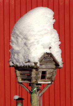 L'endroit où nourrir des oiseaux en hiver chez Puolukkamaan Pirtit Ferme de rennes à Pello en Laponie