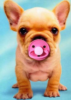 10 Things that can make your dog happy. Cute Enough