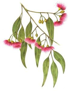 australian flora tattoos - Google Search
