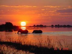 Mark Webster captured a pair of elephants taking a sunset swim. For more incredible sunset images visit www.greatestsunsets.com