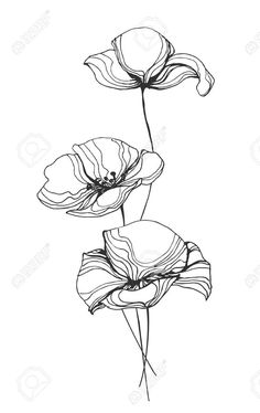 Line Poppy Flower Drawing Line Poppy Flower Drawing. Line Poppy Flower Drawing. Poppy Flowers Drawing and Sketch with Line Art White in poppy flower drawing Line Poppy Flower Drawing Poppies Line Art Stock S Vectors Flower Art Drawing, Doodle Drawing, Floral Drawing, Plant Drawing, Drawing Trees, Illustration Ligne, Illustration Blume, Illustration Flower, Line Art Flowers