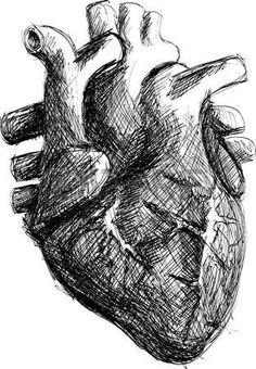 cuore umano disegno a matita
