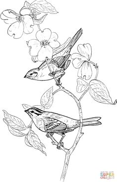 Two Perched White-Throated Sparrows coloring page | SuperColoring.com