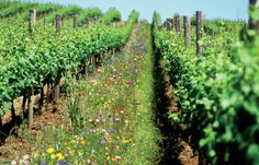 Organic Viticulture Practices Lead to Increased Soil Quality Over Time Compared to Conventional Farming Methods |