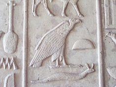 """Buitre y alimoche , El alimoche Neophron percnopterus, identificado por Gárdiner (1988) en su lista de signos con el G1, y el buitre Gyps fulvus, fueron otras de las aves de gran envergadura que los egipcios introdujeron en su panteón divino. Ellos no pudieron pasar por alto la majestuosidad de este animal y lo llevaron a la esfera divina relacionándolo con una entidad femenina que representaba el concepto de """"madre"""", asociándola a las diosas Nejbet y Nut y vinculándose de forma estrecha al…"""