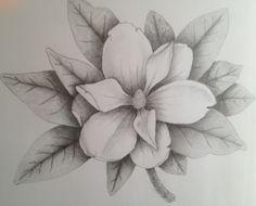 2013 Magnolia Sketch