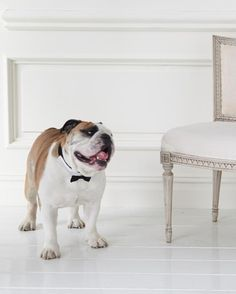 #MarthaStewartPets Wedding Bow-Tie Dog Collar, $12.99, Wedding Dog Leash, $14.99; petsmart.com.
