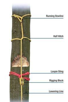 Samson Rope Catalog - Arborist 2011 - page 18 Paracord Knots, Rope Knots, Samson Rope, Tree Arborist, Survival Knots, Survival Gear, Tree Surgeons, Tree Felling, Tree Pruning