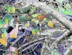 A digital painting from a Dompeya Tree in Mijas Costa, Spain by Aila Hokkanen, in February 2017.