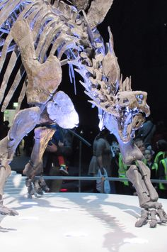 90% of the Skeleton is actual Fossils making it the most Complete Stegosaurus Ever!!!
