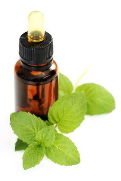 How To Make Your Own Peppermint Essential Oil- This is really good for a variety of things- pain relief, conjestion, weight loss, upset stomach relief, and more.
