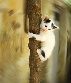 Scared kitten by jimiliop, via Flickr