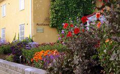 Lepaan miljöö: Kesäkukkien väriloistoa - Lepaa gardens: Assortment of summer flowers