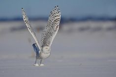 Spread your wings and make something wonderful happen this year! #Norway #Owl