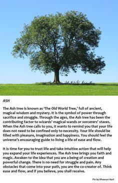 Ash Tree, probably my next tattoo