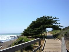 Cypress over boardwalk above Moonstone Beach*Cambria, CA   one of my favoritest places in the world!