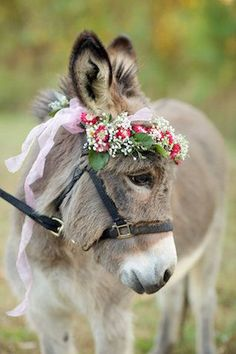 Donkey with flower crown.so cute Cute Baby Animals, Farm Animals, Animals And Pets, Funny Animals, Baby Donkey, Cute Donkey, Donkey Pics, Mini Donkey, Baby Cows