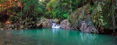 Springbrook National Park, Mt Cougal, Upper Currumbin Valley Queensland.