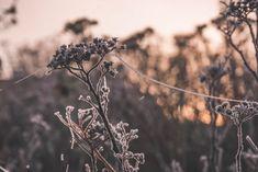 Dandelion, Flowers, Plants, Pictures, Nature, Nice Asses, Dandelions, Flora, Plant