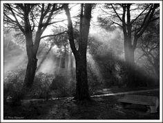 https://flic.kr/p/21me9mS | Forêt enchantée