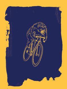 bear on a bike print (go bears?)