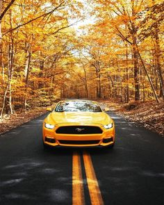"""Reasons Why Supercars Are Superior To Mainstream Vehicles The term """"supercars"""" is one that describes cars that are superior in many ways such as speed, craftsmanship, and overall capabi… Mustang 2018, New Ford Mustang, Mustang Gt500, Mustang Cars, Supercars For Sale, New Supercars, Yellow Mustang, Weird Cars, Crazy Cars"""