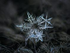 """Photos of snowflakes up close - Business Insider. Kljatov was inspired to try his own snowflake photography after seeing a website called """"Snow Crystals"""" created by a CalTech physics professor named Kenneth Libbrecht. Snowflake Photography, Macro Photography, Photography Ideas, Snowflake Pictures, Camera Rig, Fotografia Macro, Close Up Photos, Pictures To Paint, Wood Print"""